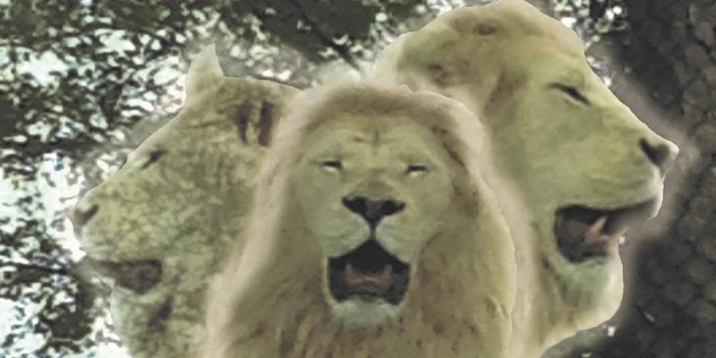 Lions Gate 8:8 Gateway